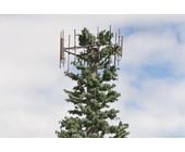 Antenne auf Hawaii
